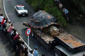 The hoax about the Largest tortoise found in the Amazon River
