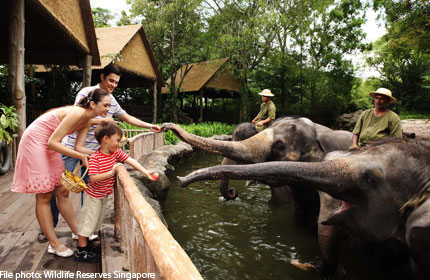 Singapore Zoo to celebrate 40th anniversary with special programmes